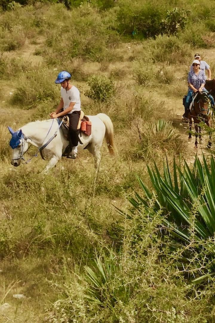 Our horses enjoy the trail too!