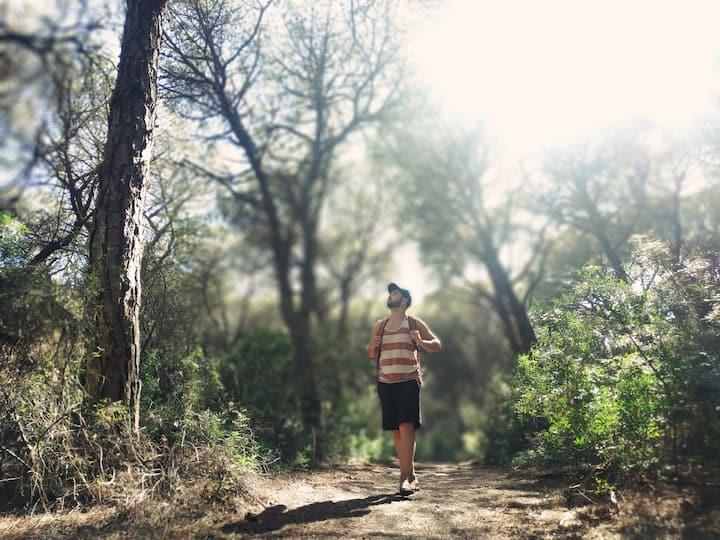 O bosque de pinheiro-manso e aroeiras