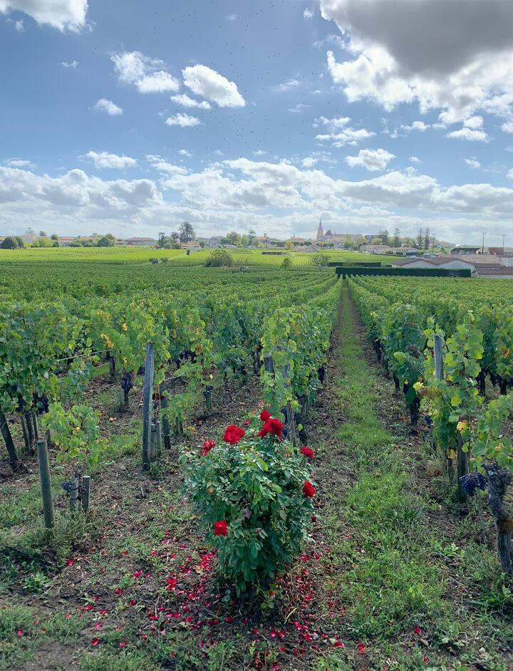 Saint Emilion town & vineyard