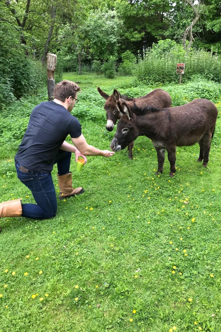 Making friends with miniature donkeys