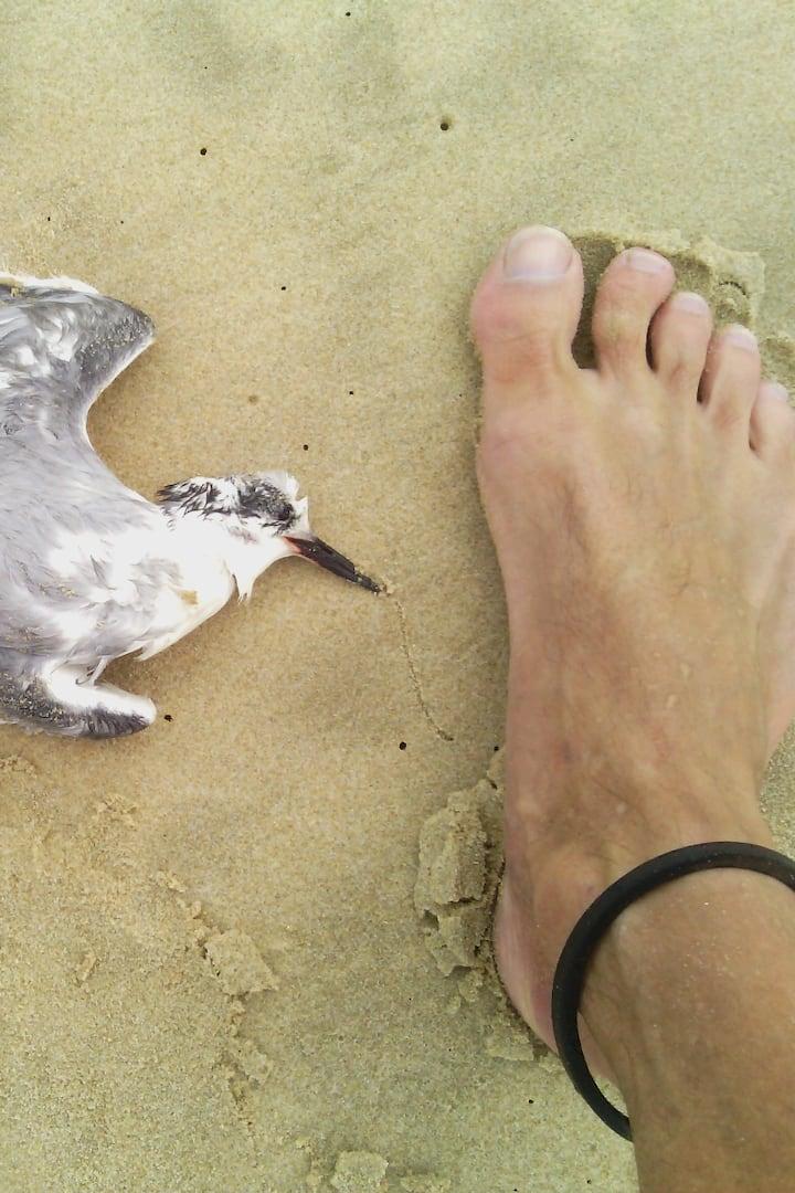Showing barefoot run with dead sea bird