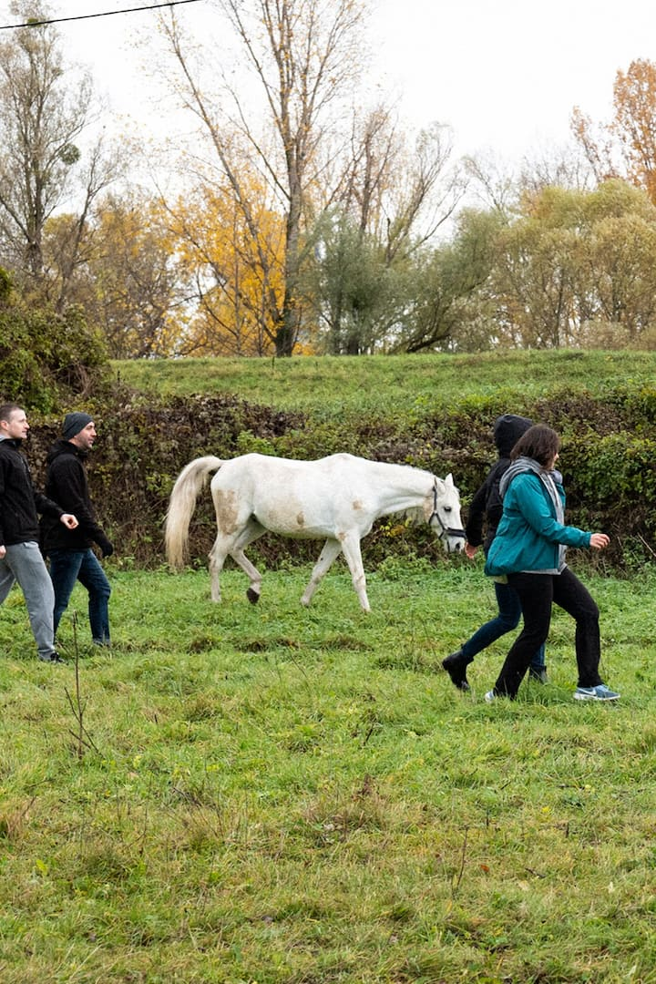 Guests collaborating with the horses