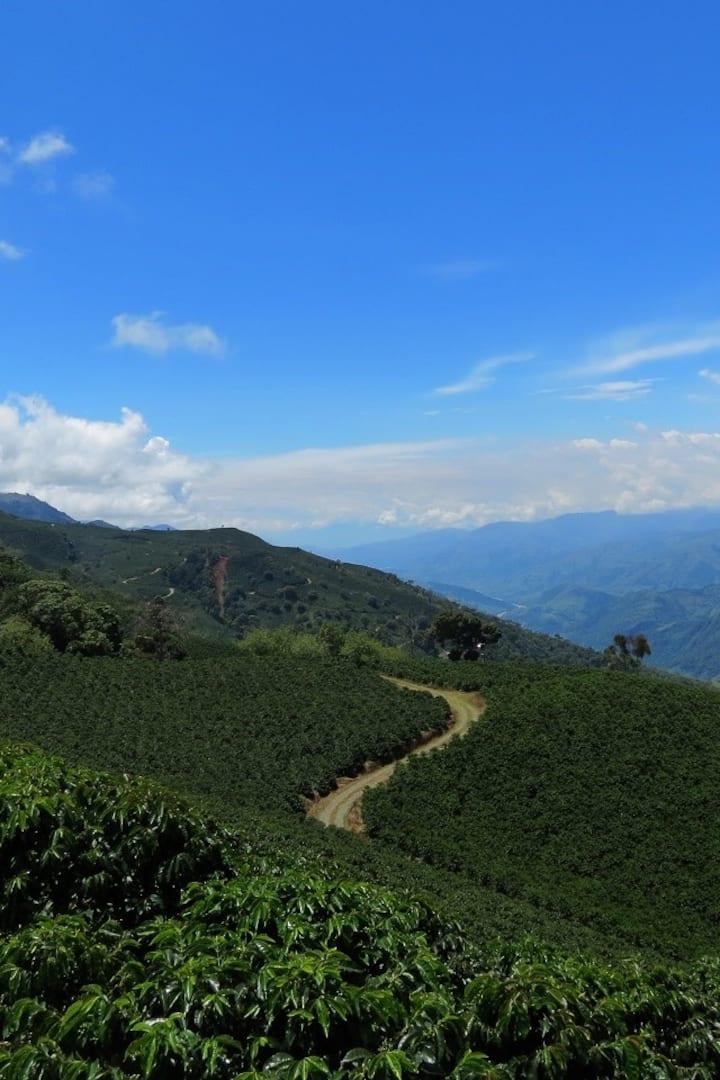 Colombian coffee scenery near Concordia