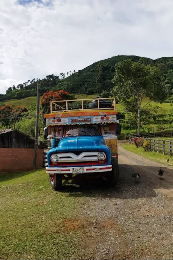 Scenery at the coffee plantation