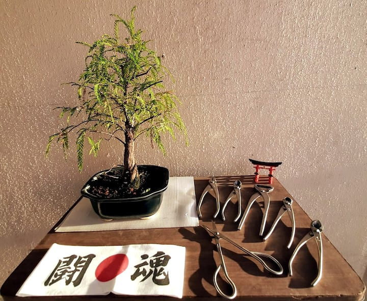 Japanese tradition, with Mexican trees