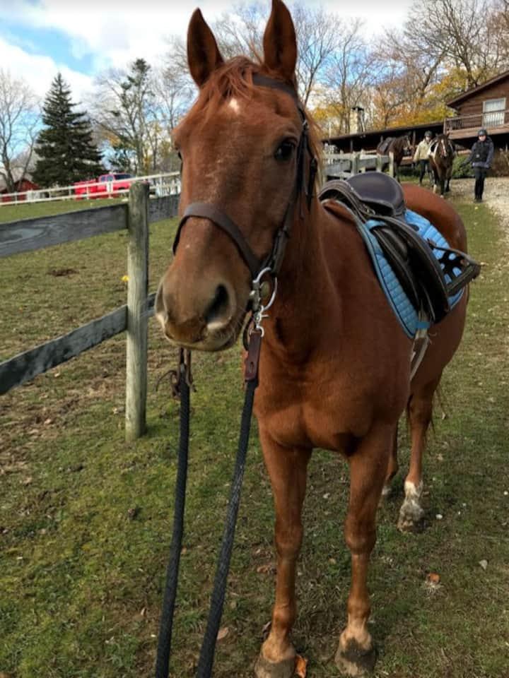 Quarter horse Tinto