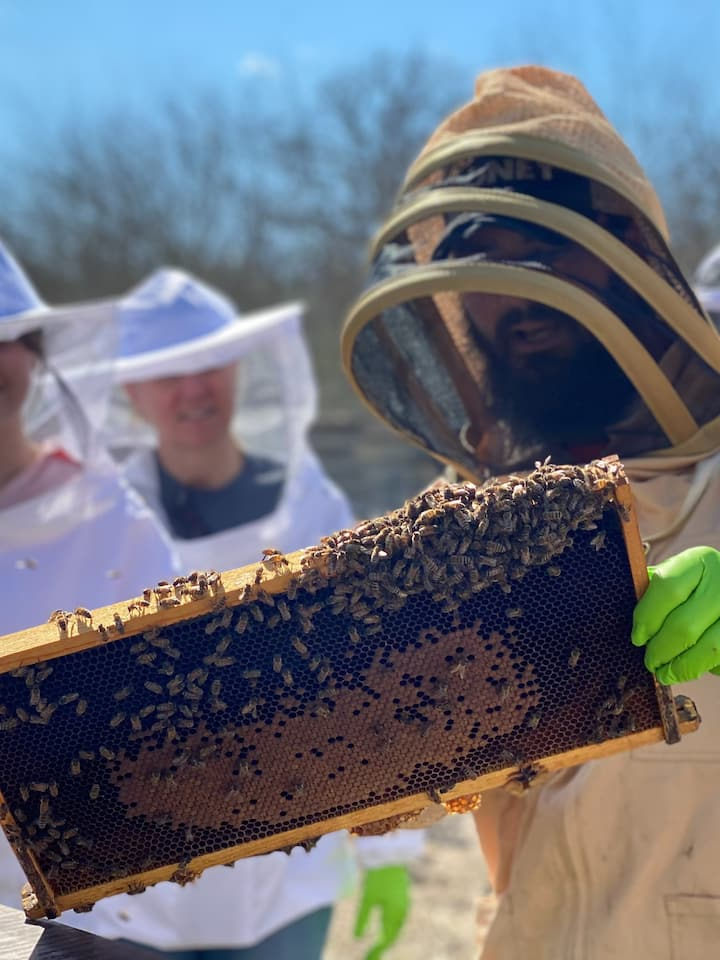 Learn about the inside of a hive