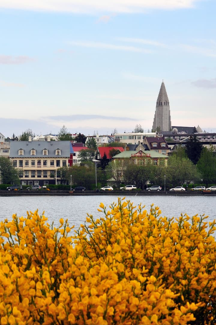 The view from the Reykjavik pond
