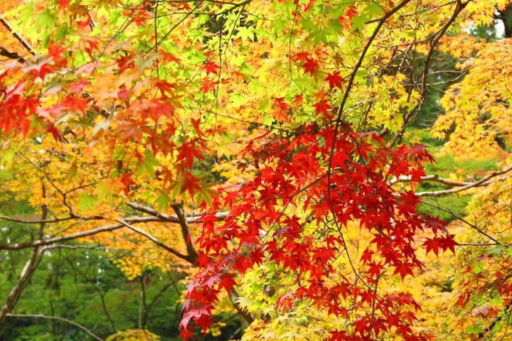 You can enjoy gradation of colors