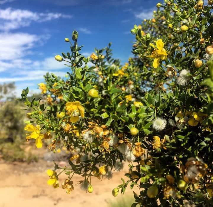 Desert Medicine Plant Hike