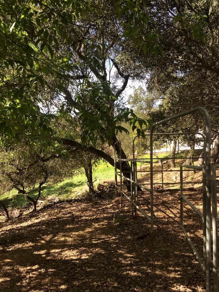 stalls under the oaks