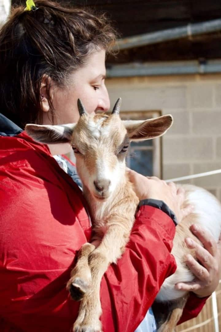 Guest with goat kid