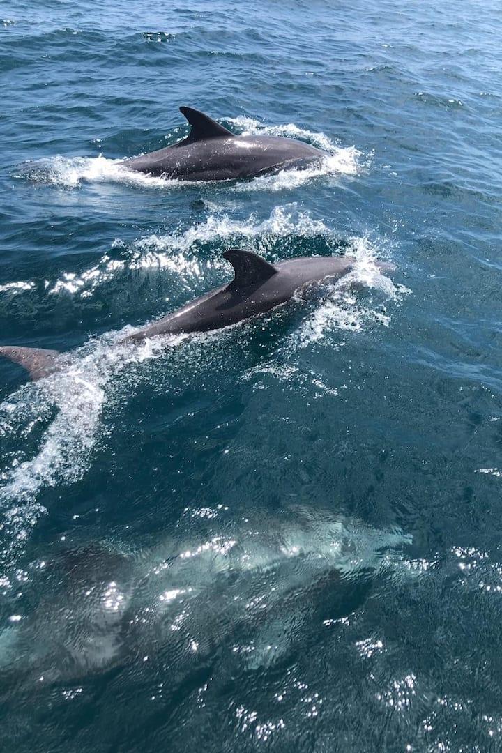 Porpoises Offshore