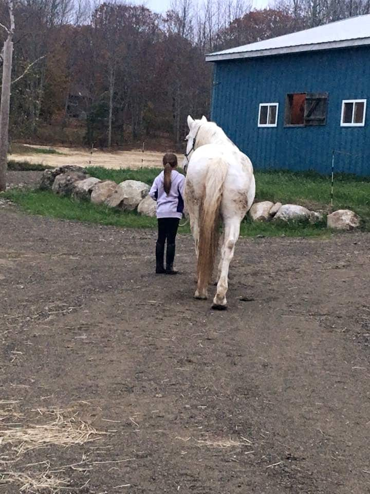 Leading your horse on your own