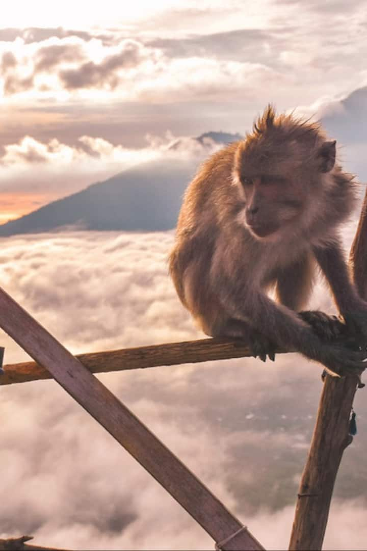 monkey top of volcano