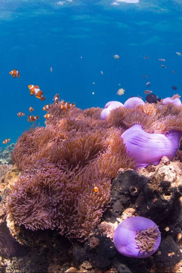Beautiful Coral Reef & Marine Life