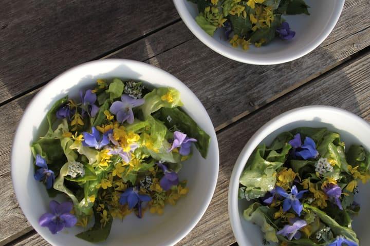 Making colorful salads