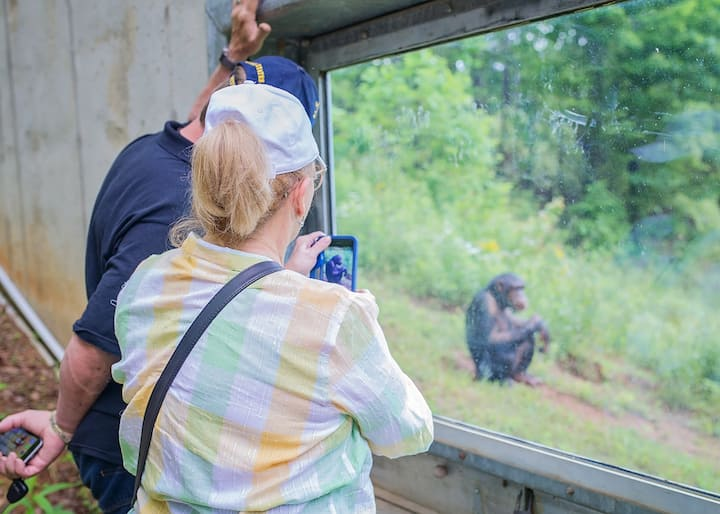 See chimps in their outdoor habitat