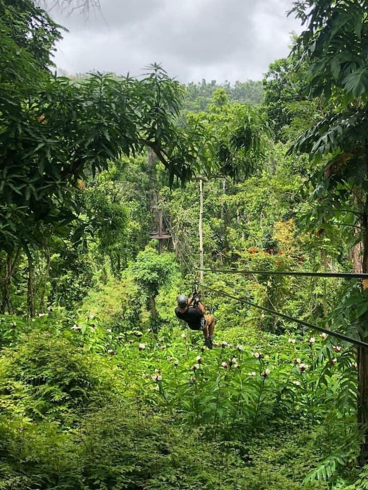 Views of El Yunque