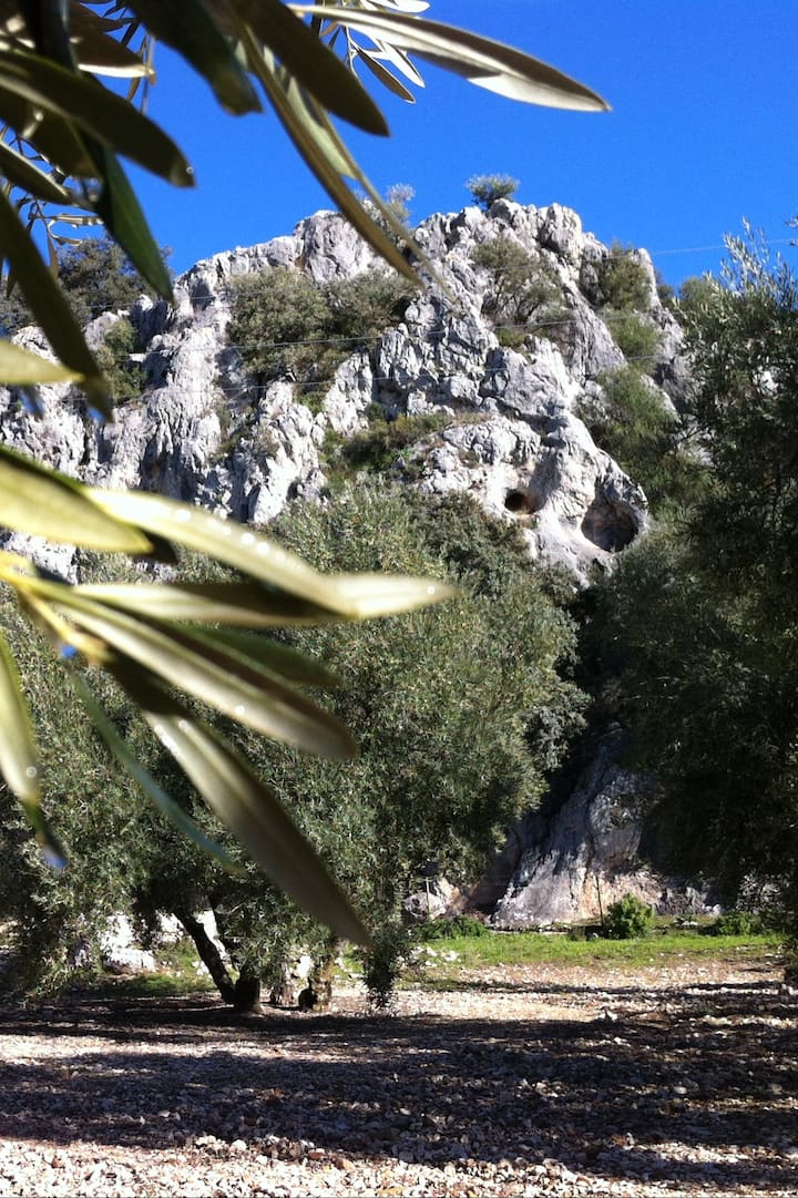 Andalusian landscapes.