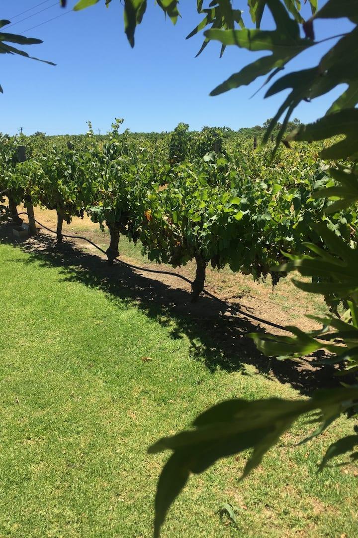 Swan Valley Wine Region