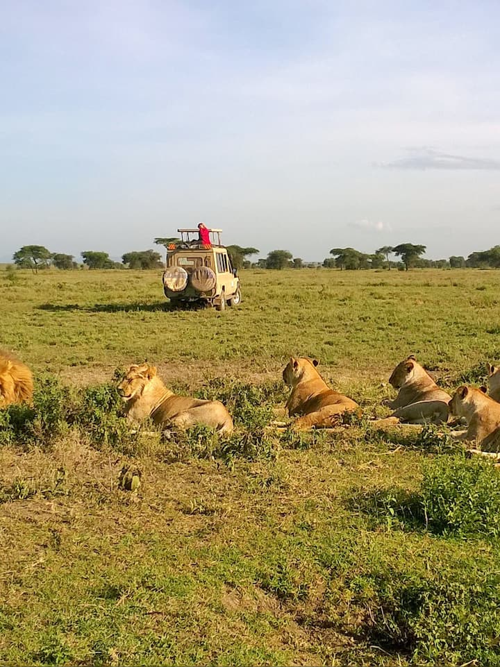Lions spotting during experience