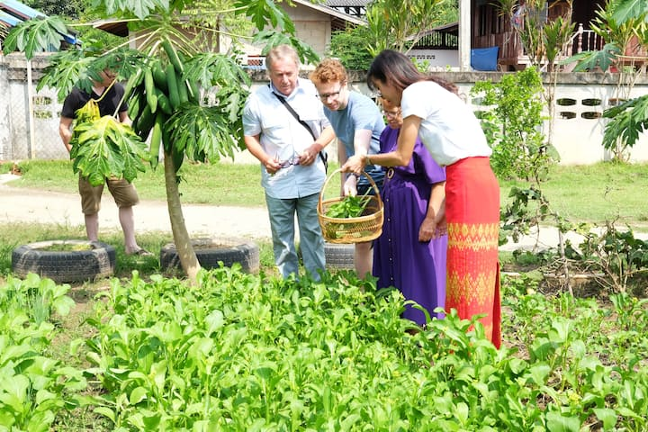 Getting vegetables from organic farm