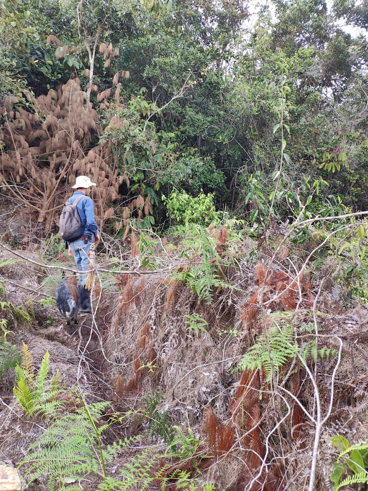Searching for spectacled bear marks