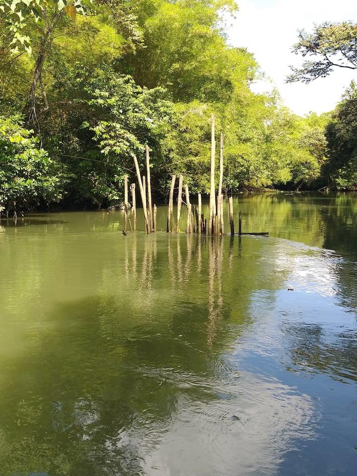 Bambu stoke in the shallow stuary