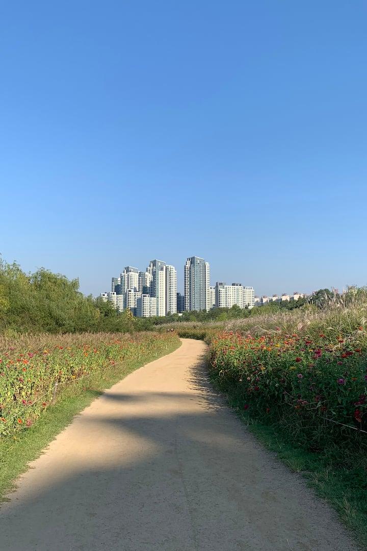 Walking road to Seorae Island
