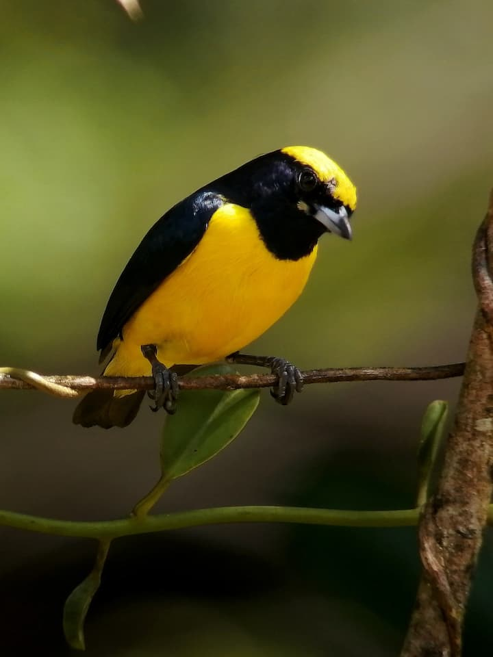 Birdwatching tours also