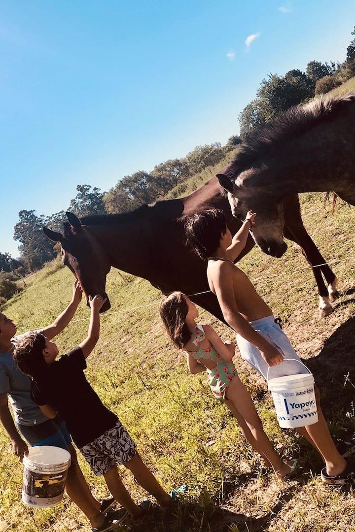Contacto directo con los equinos