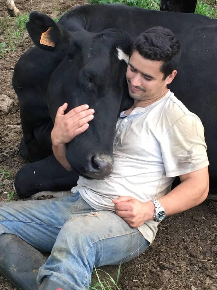 Farmer João never misses a cow cuddle