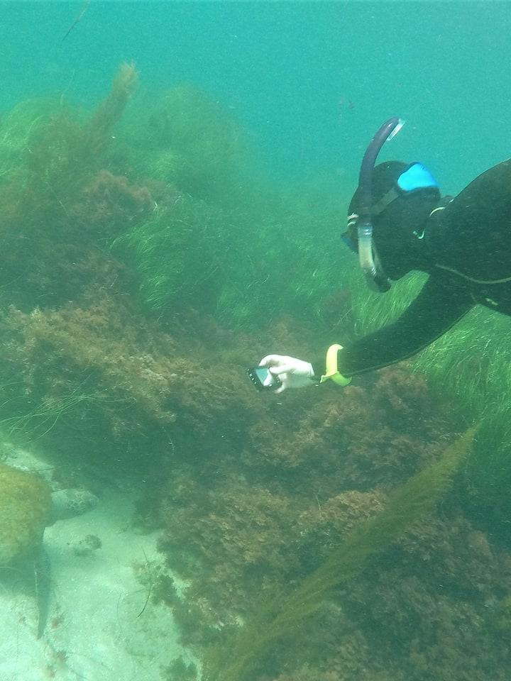 sometimes we find sea turtles!