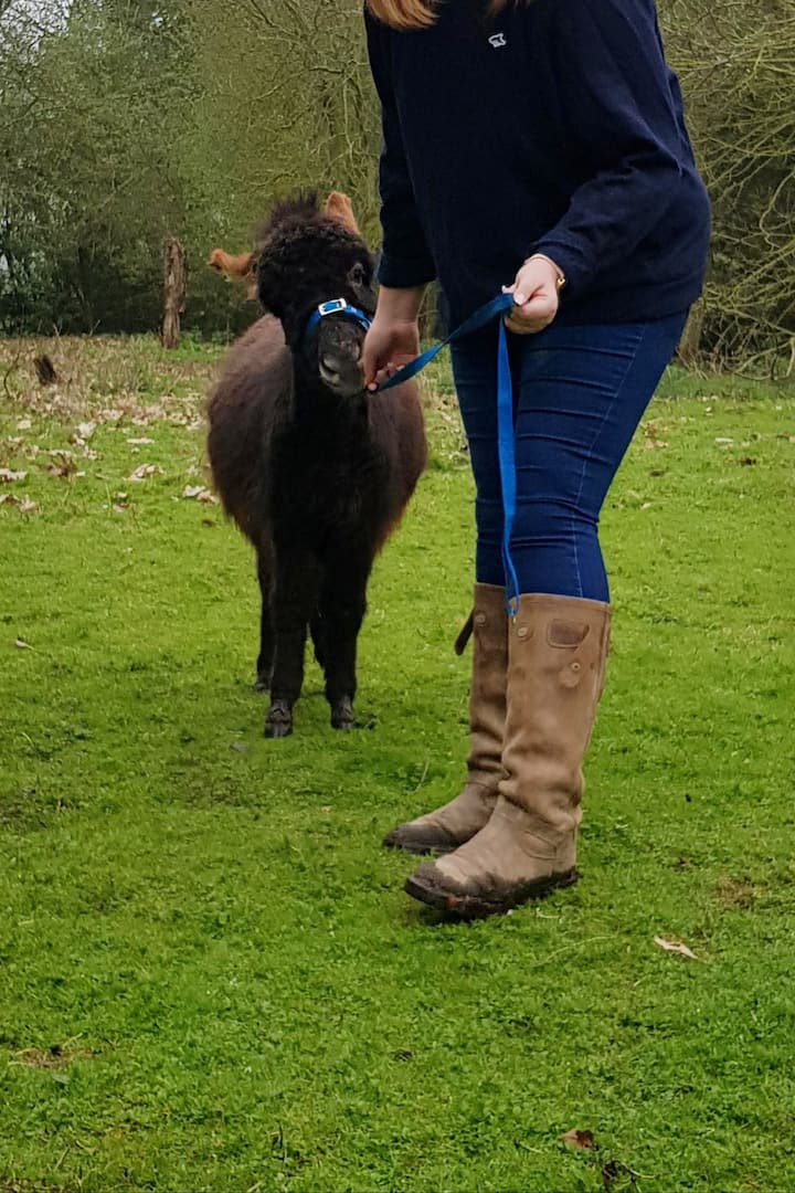Wizard being a miniature donkey