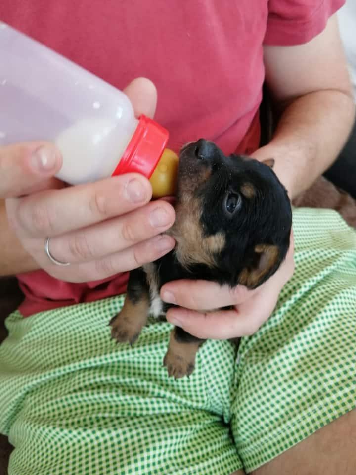 Bottlefeeding Tobias