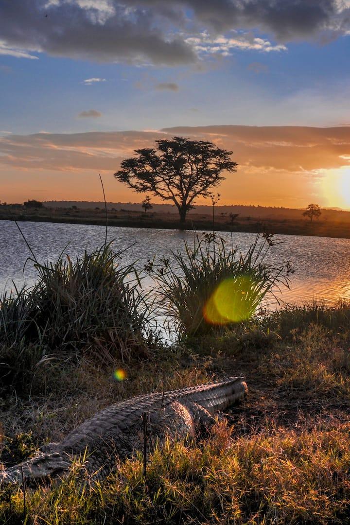 Crocodile at Hyena Dam during sunset