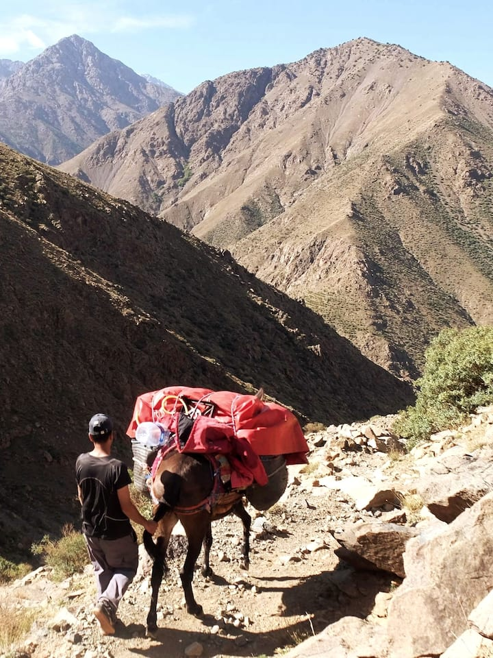 mule to carry luggage