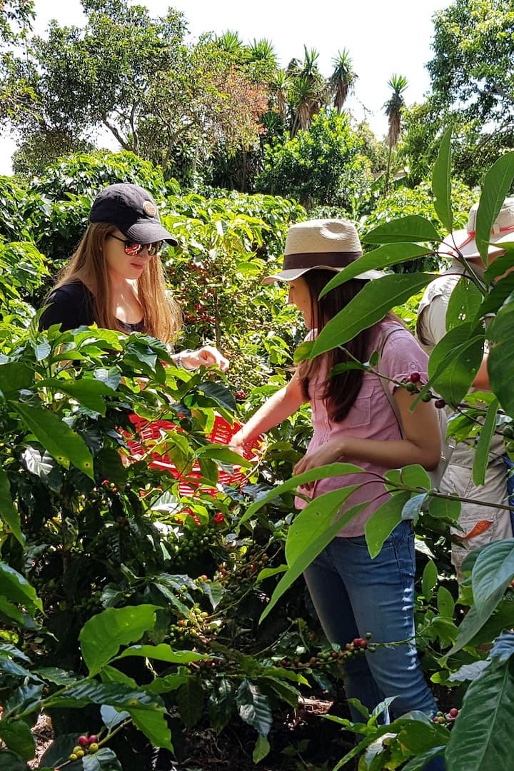 Learning about the coffee cherries