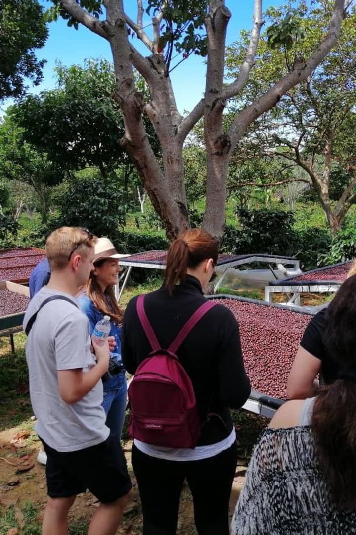 Learning how we process coffee cherries