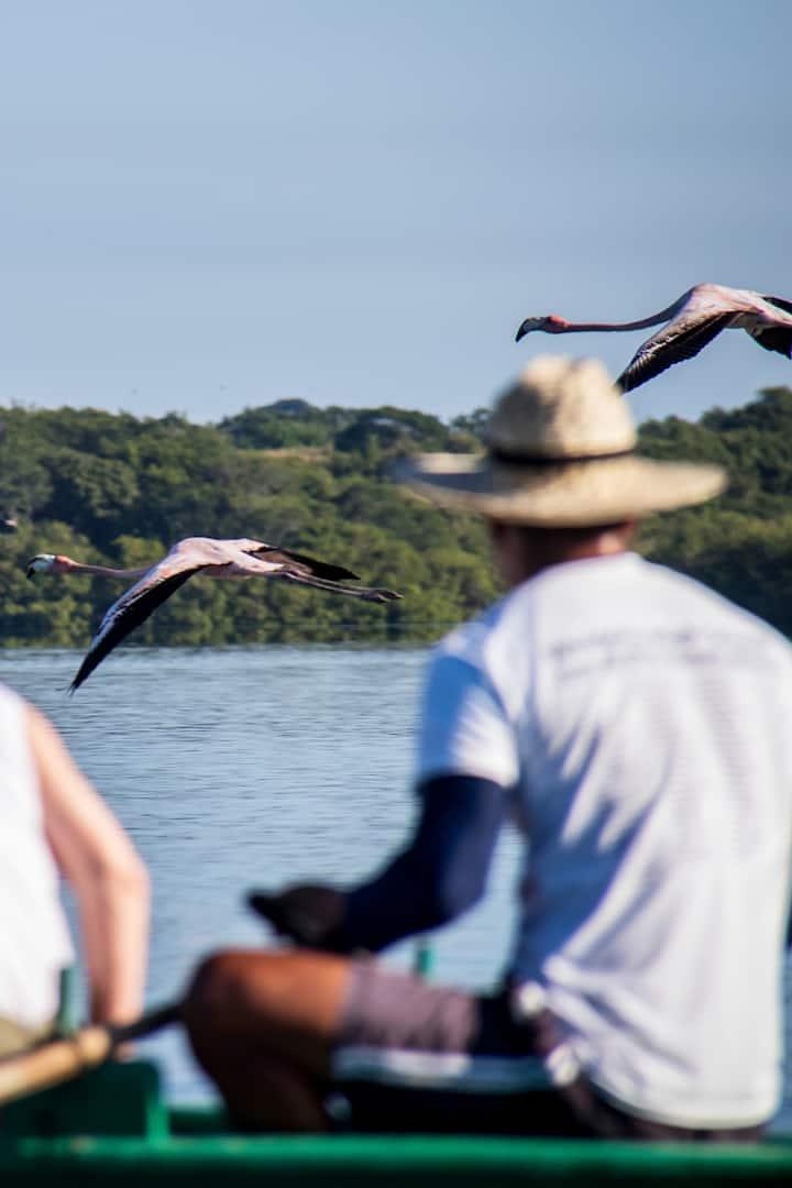 Flamencos volando