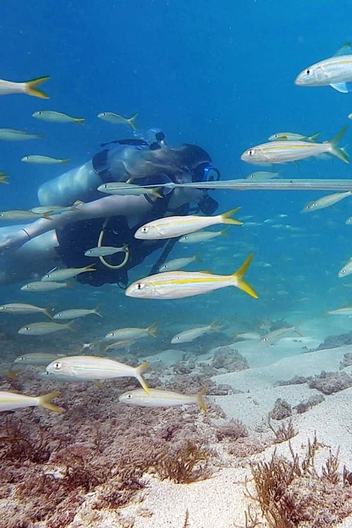 Diving San Juan