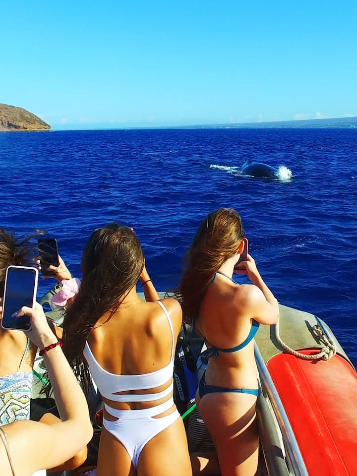 Whale watching on our way to Molokini
