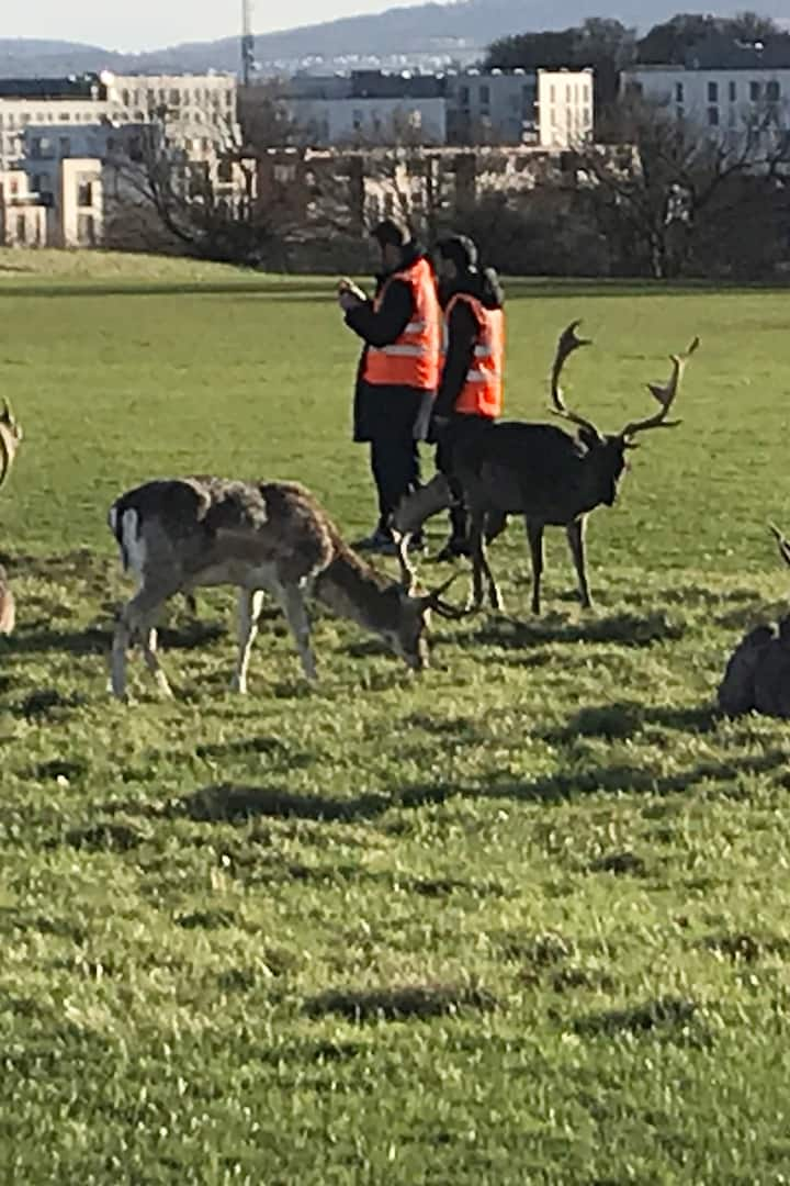 Stag/Deer & guests in Phoenix park