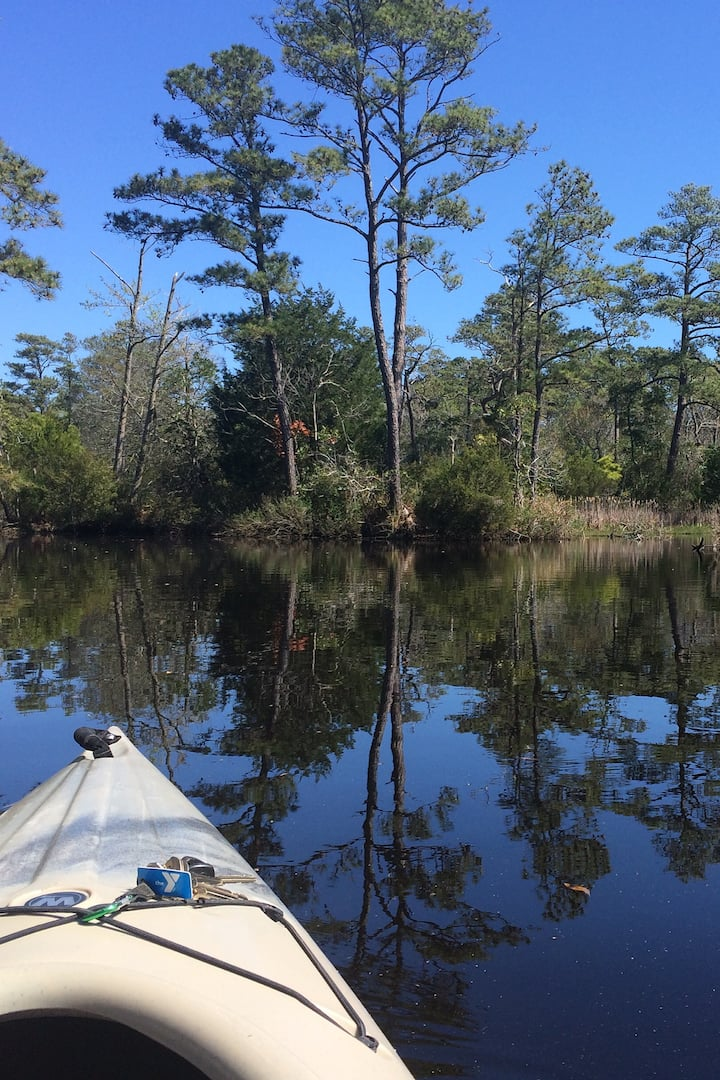 Maritime Forest in Nags Head
