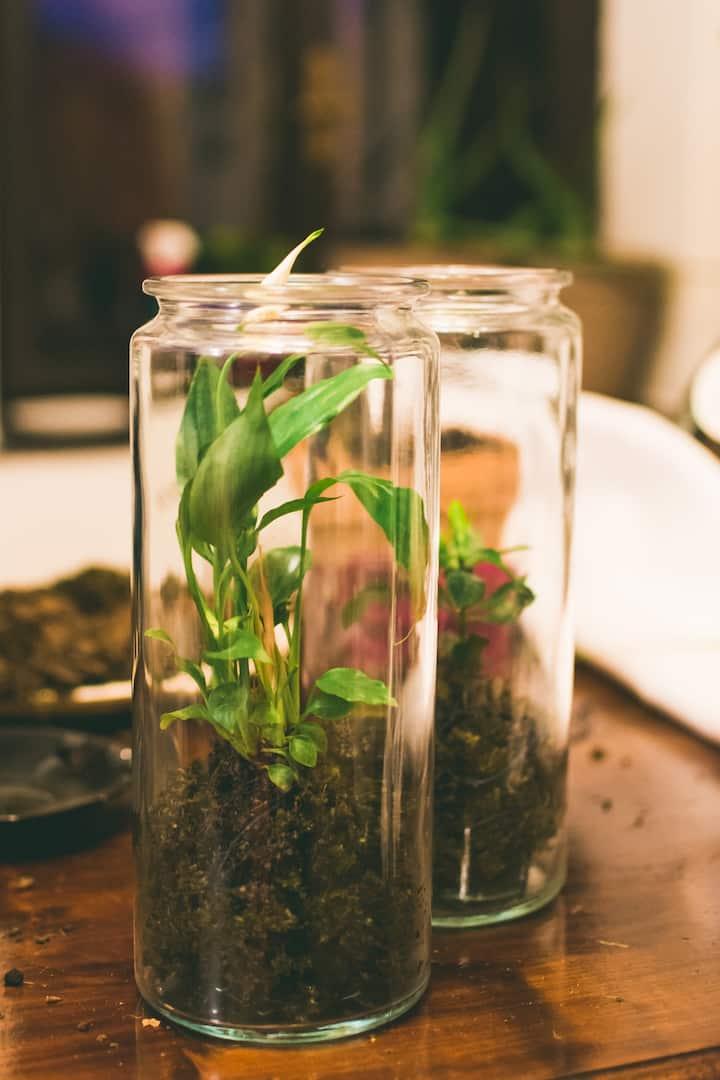 Miniscule Garden ✿ Photo by Hanka