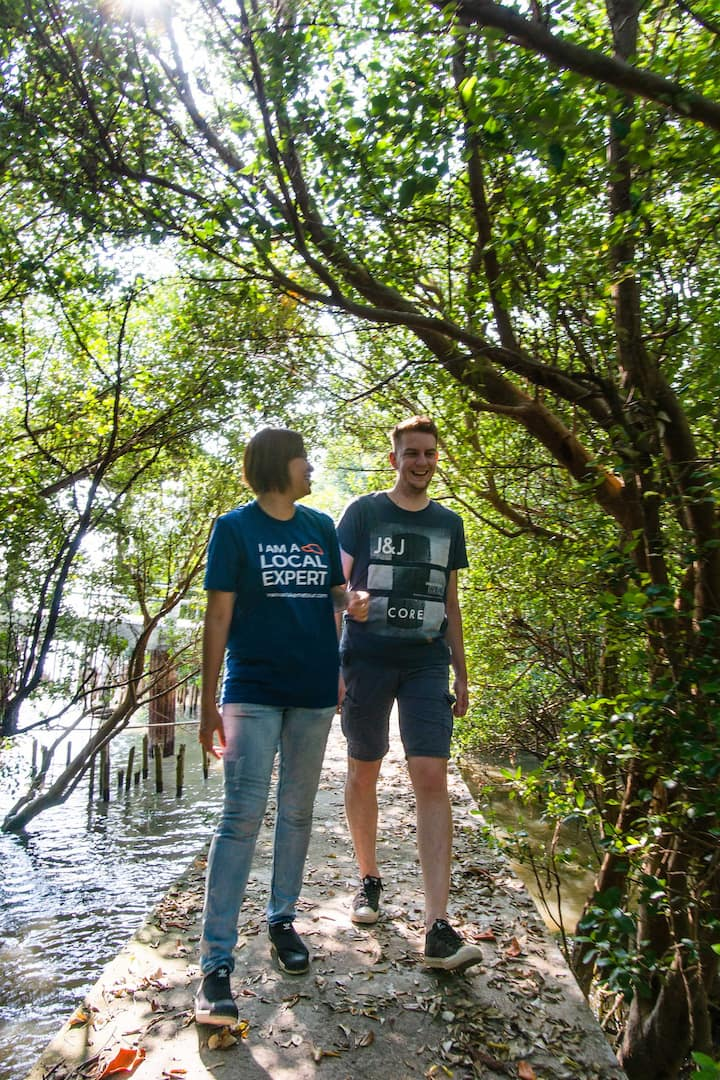 Walk to see the mangrove