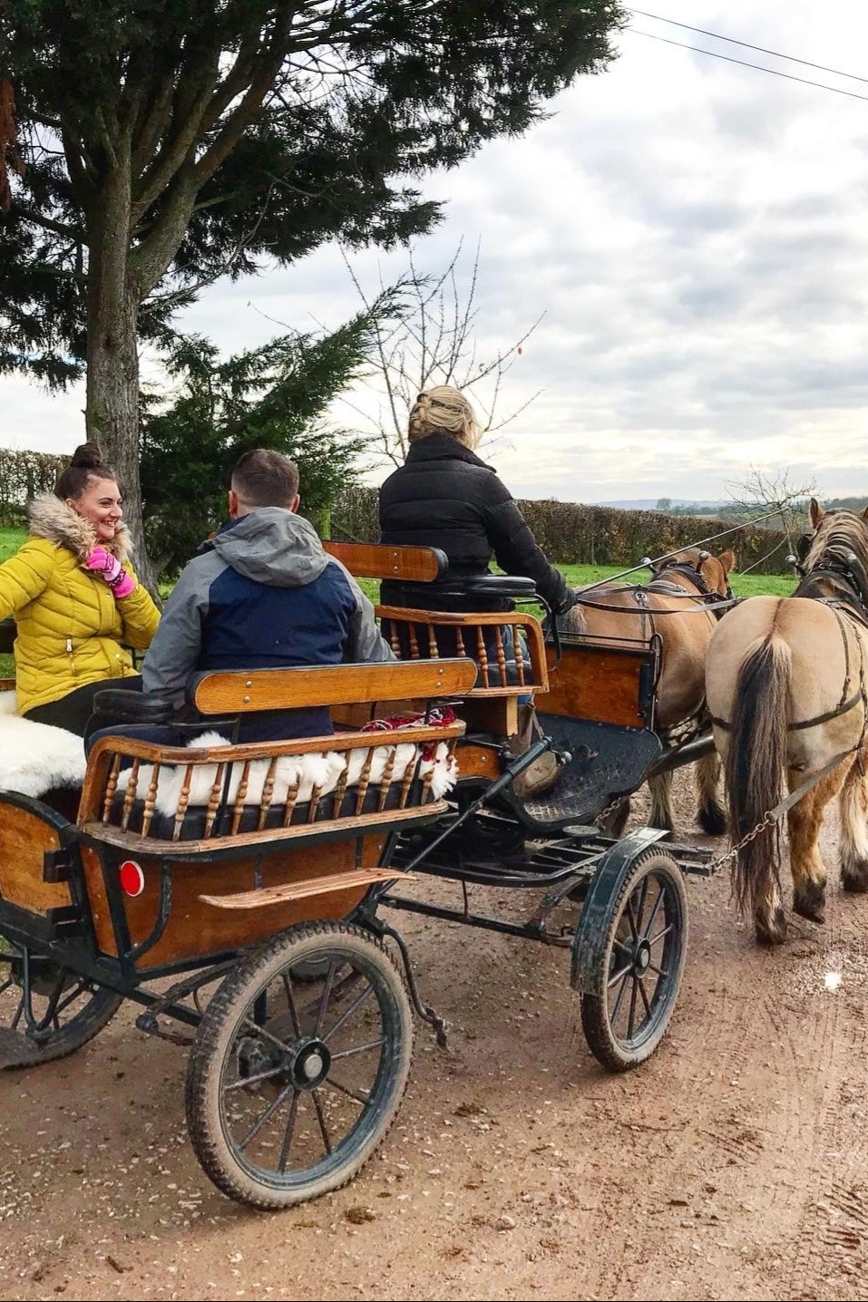 Christmas Horse Drawn Carriage Trips Airbnb