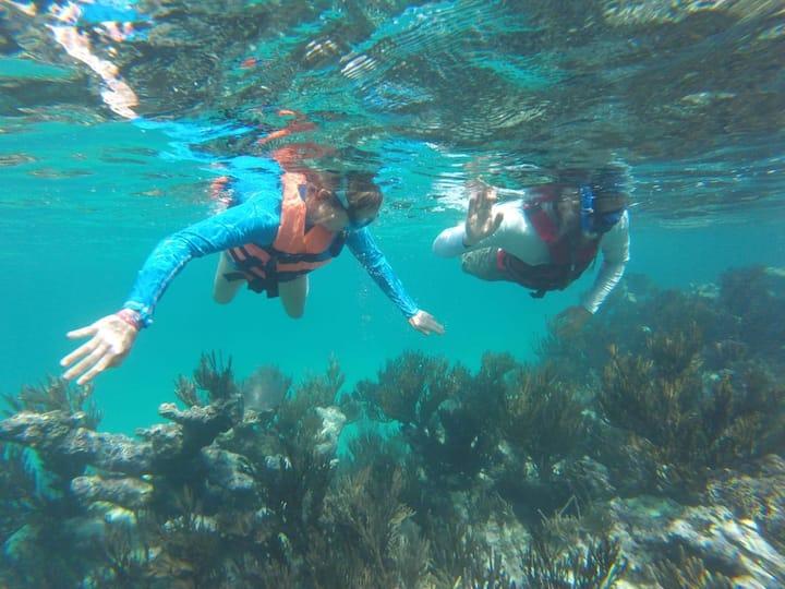 Veremos variedad de corales de colores.