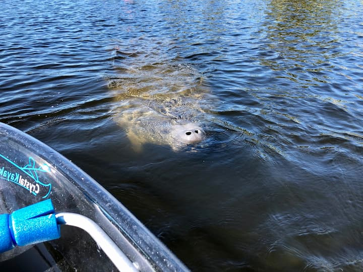 Hello there Mr. Manatee!